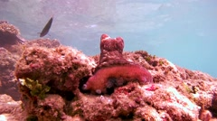 frightened octopus changes color, hiding in a hole and then climbs (Bottom View) - stock footage