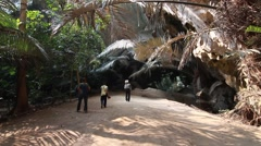 Southeast Asia rainforest Stock Footage