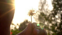 Close up blowing dandelion with sunrise, slow motion, high speed camera - stock footage