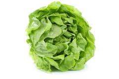 Head cabbage lettuce organic vegetable isolated on white - stock photo