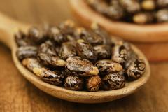 Castor beans - stock photo
