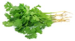 Bunch of fresh coriander leaves - stock photo