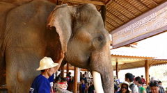 tourist travel to see asian elephant in the park at Mae Sa elephant camp - stock footage