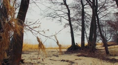 Lake and Forest Beach . Camping. Stock Footage