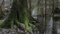 Rain in the wild forest. Stock Footage