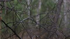 Beautiful views of the wild taiga. Stock Footage