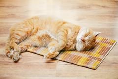 Red Tabby Cat Male Kitten Sleeping In His Bed On Laminate Floor Stock Photos
