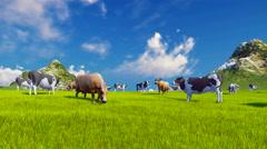 Dairy cows graze on alpine meadow 4K - stock footage