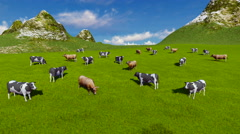 Herd of dairy cows on alpine pasture Aerial view 4K - stock footage
