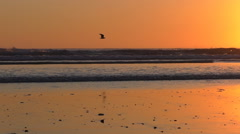 Birds fly above beach before sunset Stock Footage