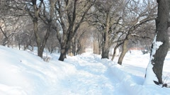 WInter tree alley Stock Footage