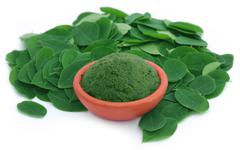 Edible moringa leaves with ground paste Stock Photos
