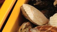 Live seashells at the fish market in Busan, Korea. Stock Footage