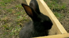 Young black rabbit see to camera - stock footage