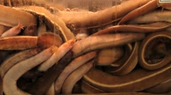 Fresh seafood in the tank at the fish market in Busan, Korea. Stock Footage