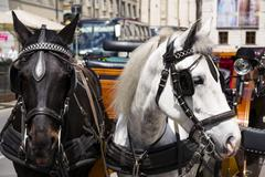 Horse carriage in Vienna, Austria with bowler on the light Stock Photos