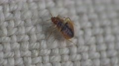 Bedbug insect parasite on the sheet in bed at night, macro Stock Footage