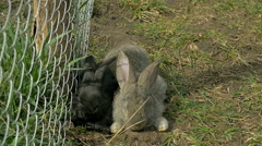Young black and gray rabbits sitting together - stock footage