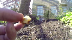 A grey squirrel running on a park in Brighton, Uk. Stock Footage