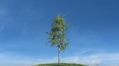 Growing birch tree against sky Stock Footage