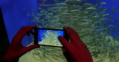 Woman smartphone school of fish Stock Footage