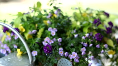 Watering can and flowers Stock Footage