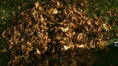 Boy jumping into leaves Stock Footage