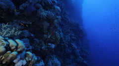 Deep colourful reef wall, Red Sea, Egypt - stock footage