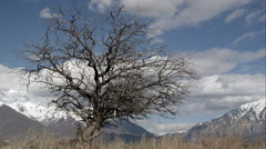 Time lapse of clouds moving behind a tree with no leaves. Stock Footage