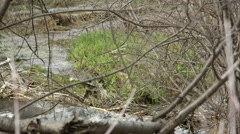 View through sticks of green grass and water flowing in stream. Stock Footage