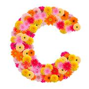 Letter C alphabet with gerbera  isolated on white background Stock Photos