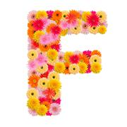 Letter F alphabet with gerbera  isolated on white background - stock photo