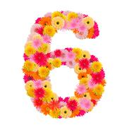 Flower number six. Floral element of colorful alphabet made from gerbera Stock Photos