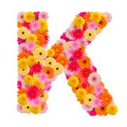 Letter K alphabet with gerbera  isolated on white background Stock Photos