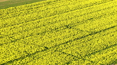 Aerial shot of canola field - stock footage