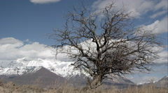 Time lapse of clouds moving behind a tree in post winter landscape. Stock Footage