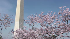 Washington Monument and cherry blossoms Stock Footage