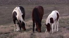 View of three wild horses grazing. Stock Footage