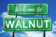 Walnut vintage green road sign with blue sky background Stock Illustration
