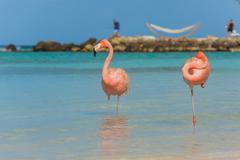 Two flamingos on the beach Stock Photos