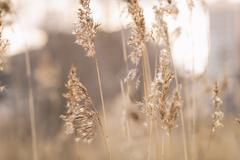 dry wild grass on meadow in early spring - stock photo