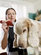 Dog and groomer in domestic setting Stock Photos