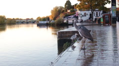 View of a Grey Heron flying away on the Thames riverside in London, Uk. Stock Footage