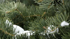 Close up view of pine tree as snow falls from branches above. Stock Footage