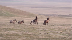 Group of wild horses running in the distance. - stock footage