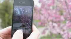 Man makes Photo by Mobile Cell Phone in a city park Cherry blossoms Stock Footage
