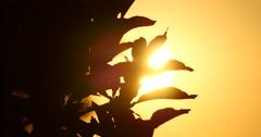 Sun Breaking Through Trees Stock Footage