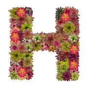 Letter H made from bromeliad flowers isolated on white background Stock Photos