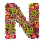 Letter N made from bromeliad flowers isolated on white background Stock Photos