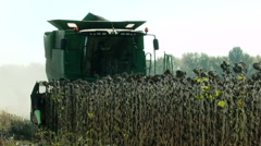 Harvesting sunflower by using a modern combine harvester Stock Footage